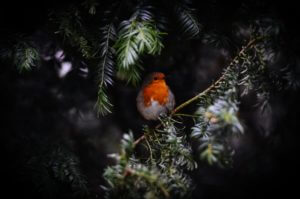 Backyard Birding Gifts