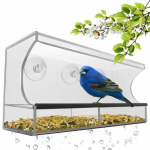 Window Feeders for Bluebirds