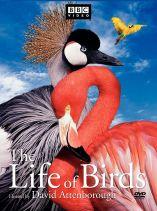 Best Bird Documentary