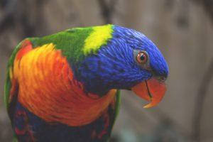 Bird Pictures of Birds