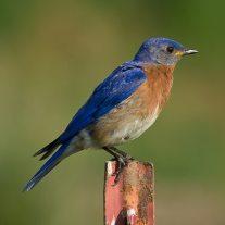 Best Bluebird Feeders