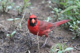 best cardinal feeders