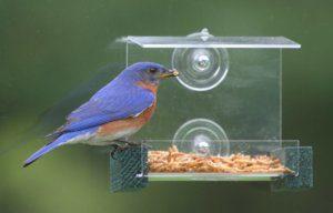best window bluebird feeders