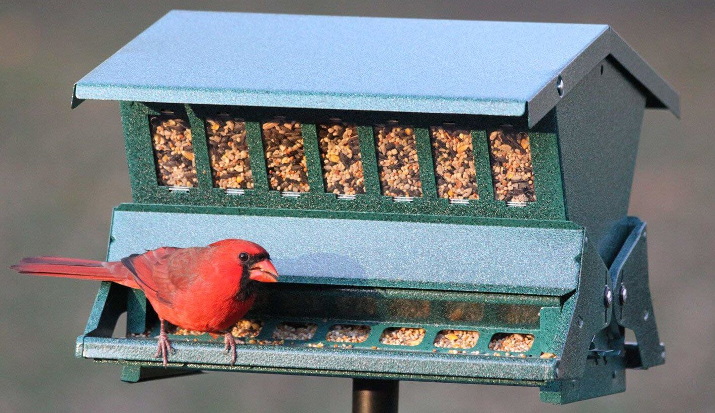 best feeders for cardinals