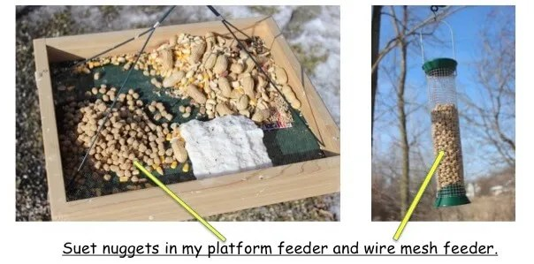 suet nuggets on woodpecker feeders