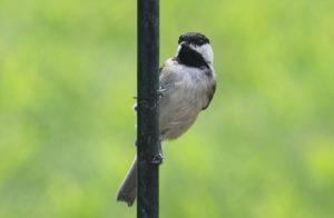 squirrel proof bird feeder pole systems
