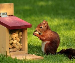 Squirrel Feeders: The Best of 2021 (6 total)