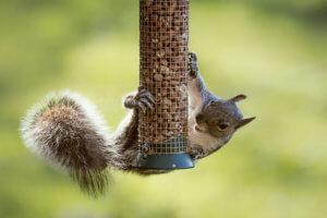 prevent squirrels on bird feeders