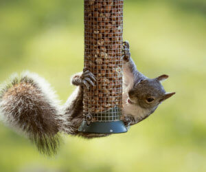8 PROVEN Ways To Keep Squirrels Off Bird Feeders (2021)