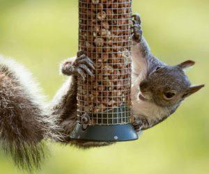 8 HUMANE Ways To Keep Squirrels Off Bird Feeders (2021)