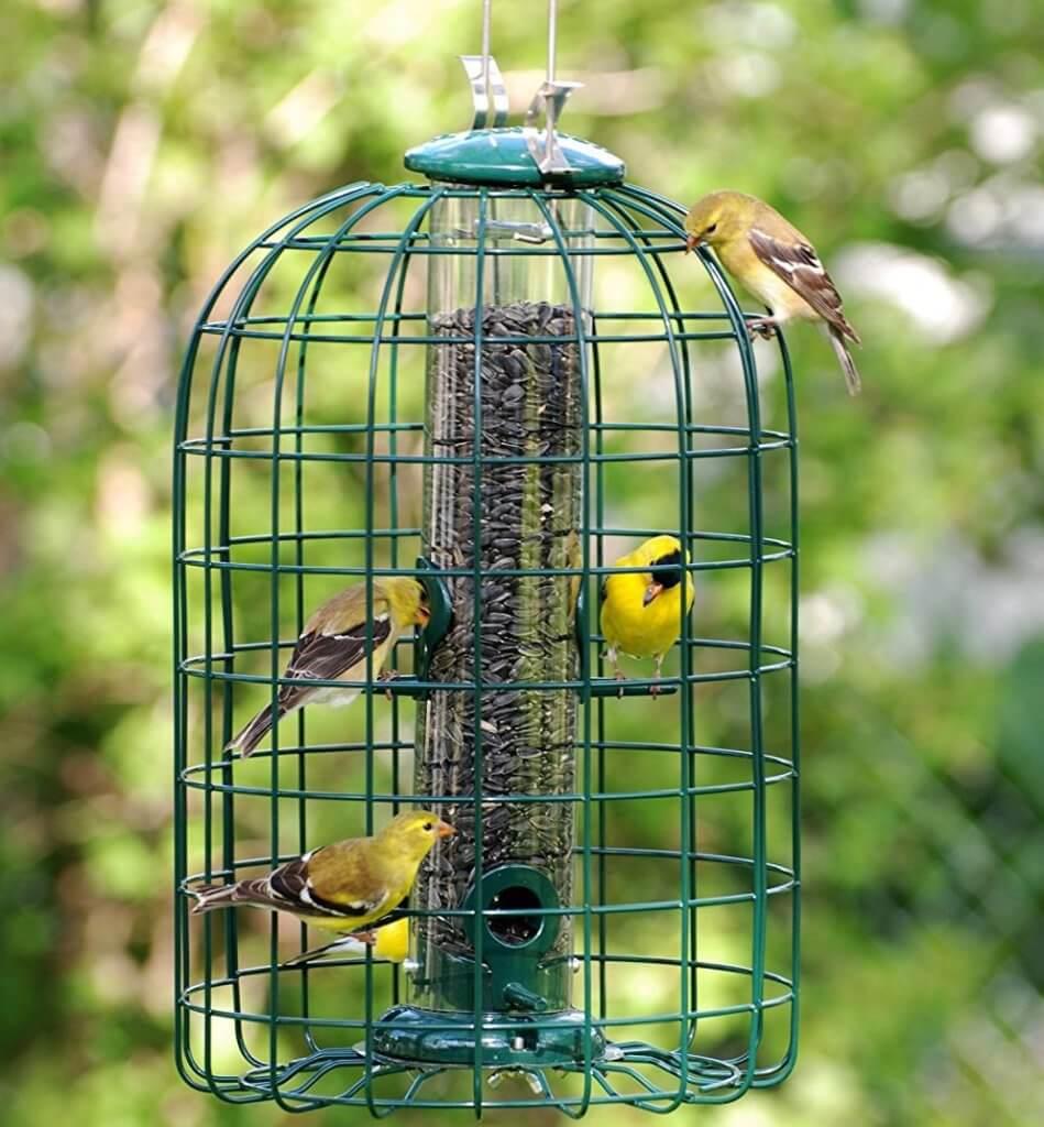 bird feeders that prevent squirrels