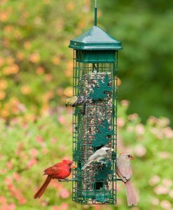 bird feeders that don't let squirrels eat