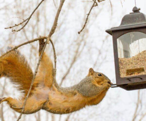 6 Squirrel Proof Bird Feeders [That ACTUALLY Work!]