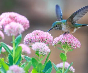 How To Attract Hummingbirds: 38 Simple Tips (2021 Guide!)