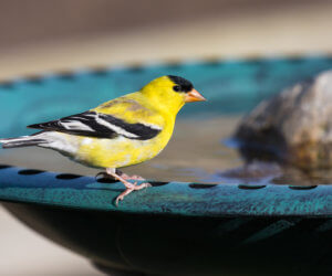 The Bird Bath Buying Guide: 8 Questions To Ask Yourself (2021)