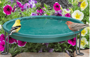Ground bird baths