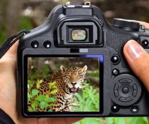 16 Best Lenses for Wildlife Photography (Nikon & Canon)