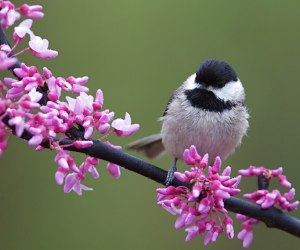 The ULTIMATE Guide to Attracting Birds To Your Yard!