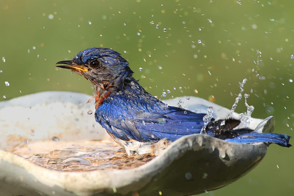 how to attract birds with birdbath