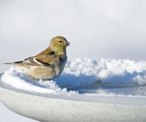 The 6 BEST Heated Bird Baths To Try This Winter (2021)