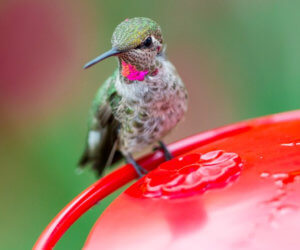 The 8 Best Hummingbird Feeders (That Actually Work in 2021)