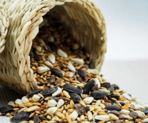 Bird Seed 101: The 10 Best Types For Wild Birds