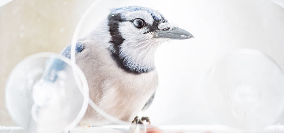 Best Blue Jay Feeders
