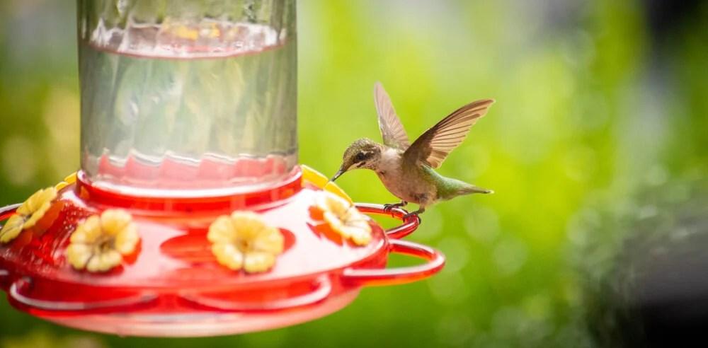 hummingbird nectar feeder types