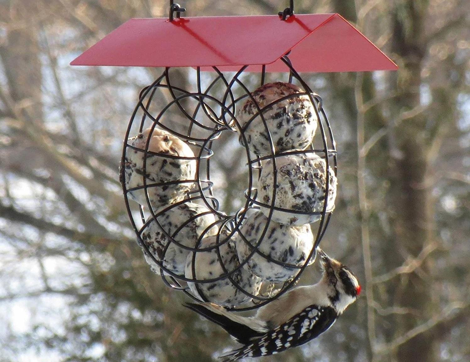 suet ball woodpecker feeder