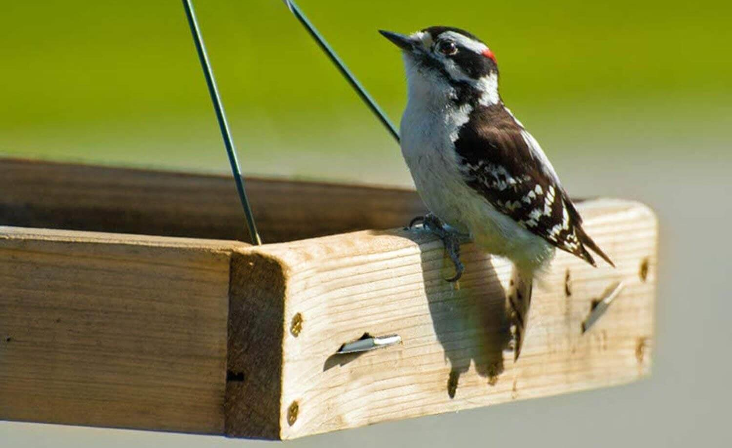 tray feeder for feeding suet nuggets and cakes