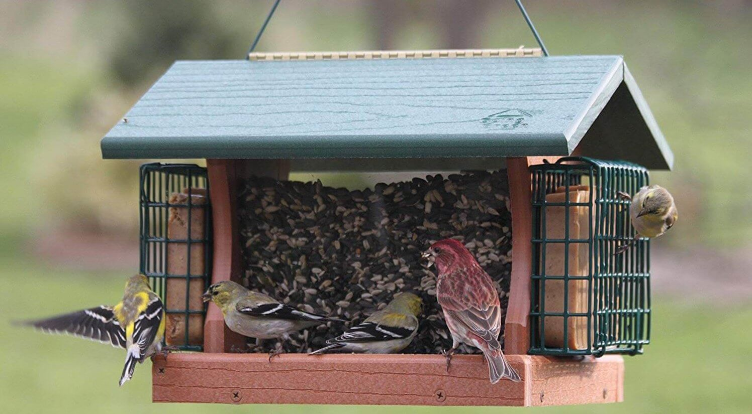 hopper feeder with suet cages attached to sides