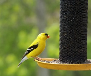 Best Bird Feeders For Small Birds (7 PROVEN Choices!)