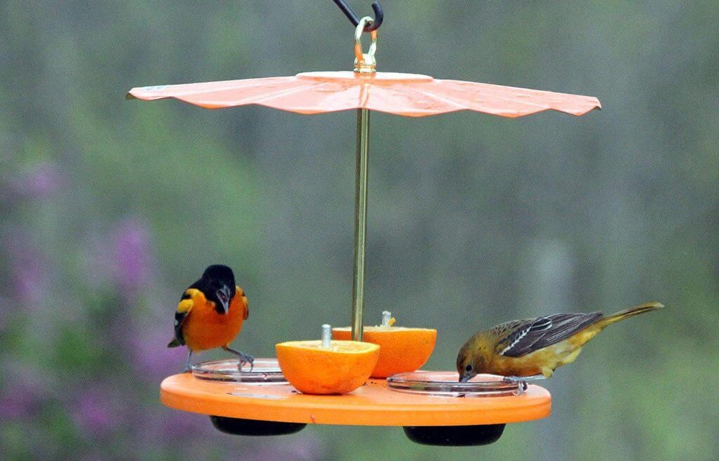 The BEST Oriole Feeders