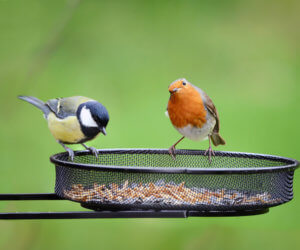 Birds In The Garden: 10 PROVEN Tips to Attract & Deter