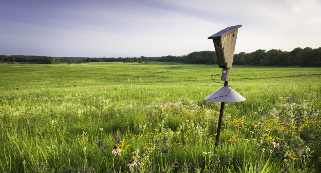 Gilbertson style bluebird house in an open field with baffle