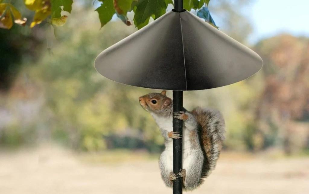 squirrels can't get past baffles