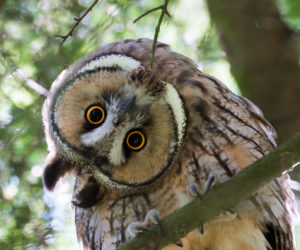 15 FUN & INTERESTING Facts About Owls! (2020)