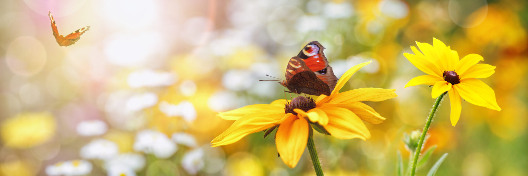 butterfly gardens, plants, and flowers