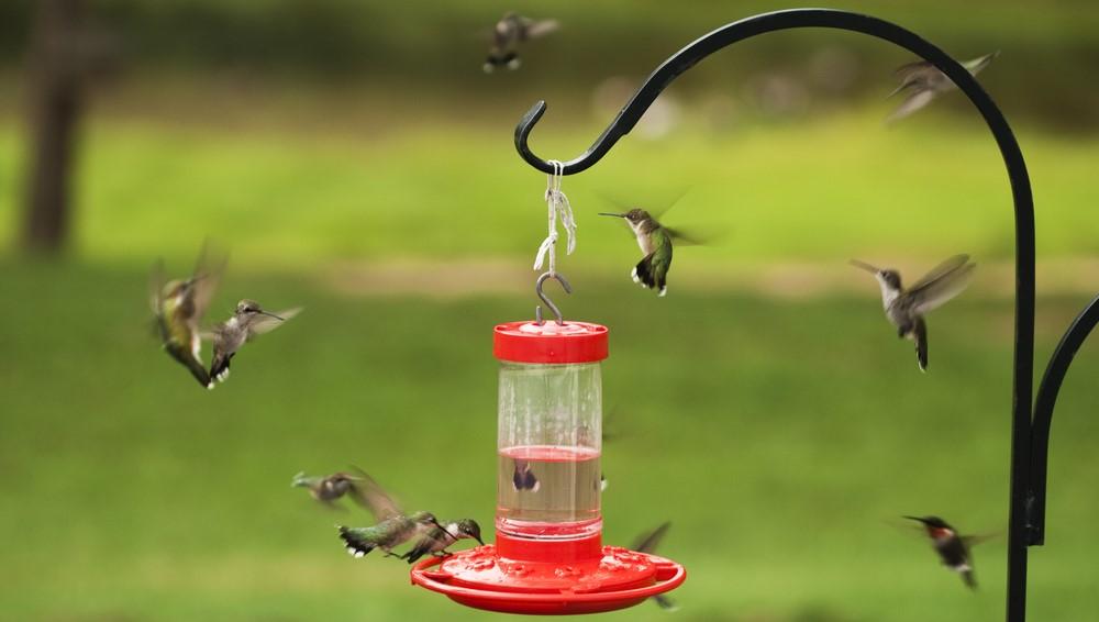 hummingbird feeder on a shepherds hook