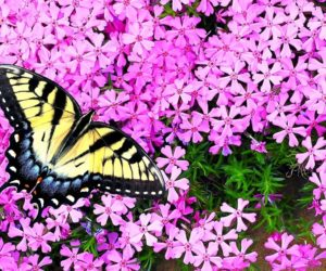 20 PROVEN Plants That Attract Butterflies [2021 Guide]