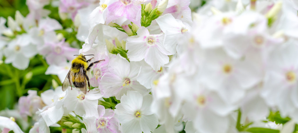 best flowers for attracting bees