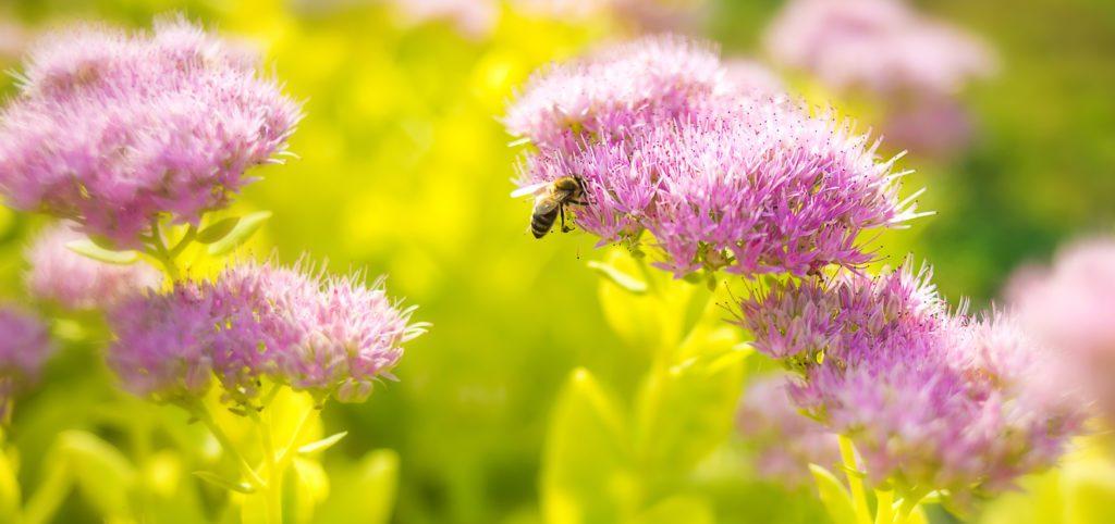 bee flowers for pollinator garden