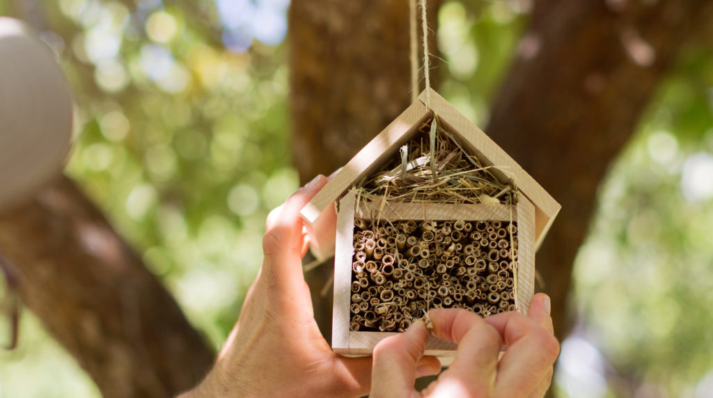 Man hanging insect hotel