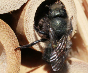 Bee Houses 101: Where to buy & how to use them! [2021]