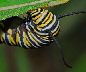 34 Host Plants For Butterflies & Caterpillars (New Guide)