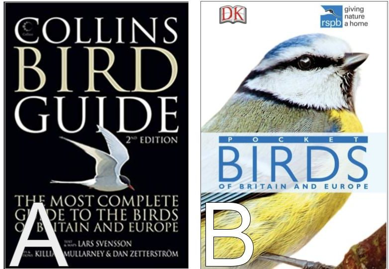 field guide for common birds of europe and britain