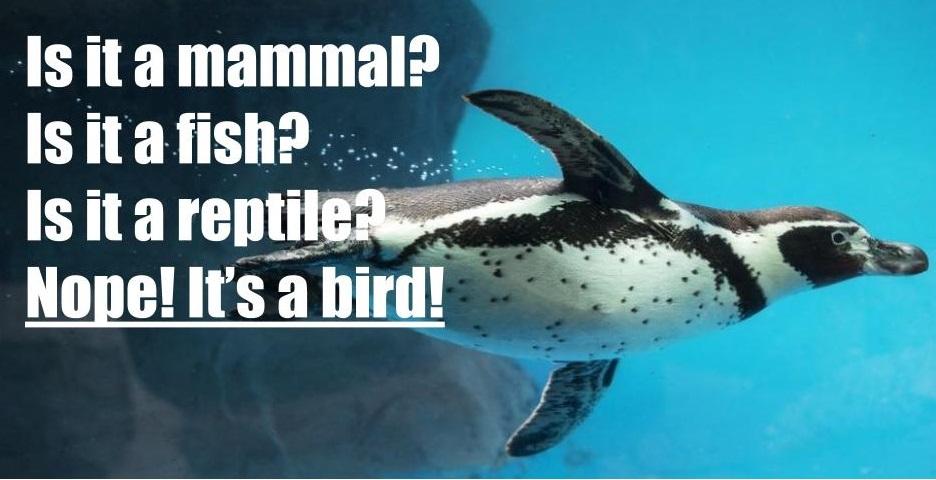 penguins are birds
