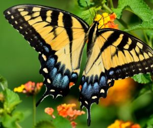 How to Attract Butterflies: 17 Tips (2021 Guide)