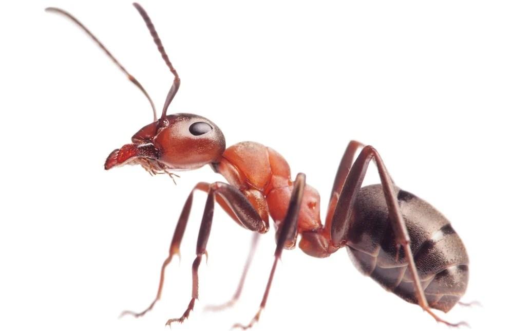 ants off hummingbird feeders