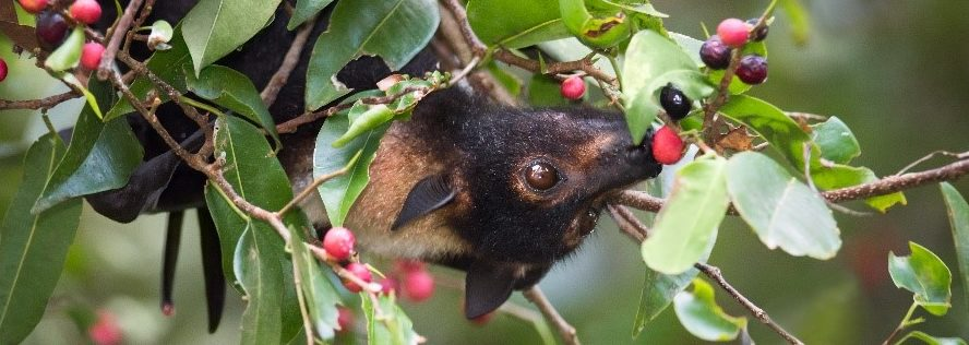 attract bats to your backyard